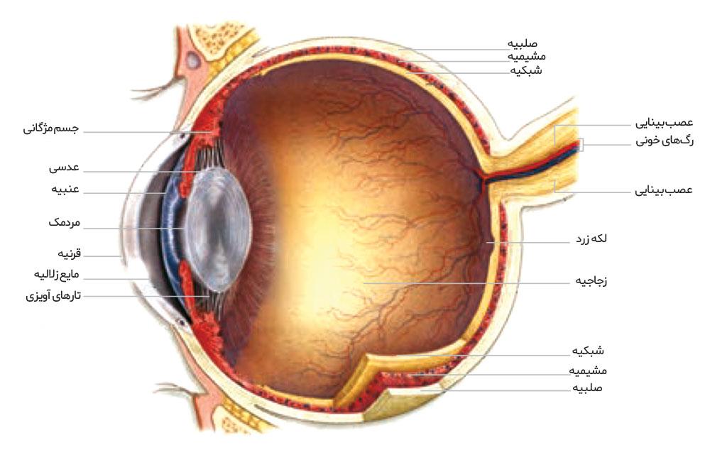 ساختمان چشم  (اپتیک بینایی)