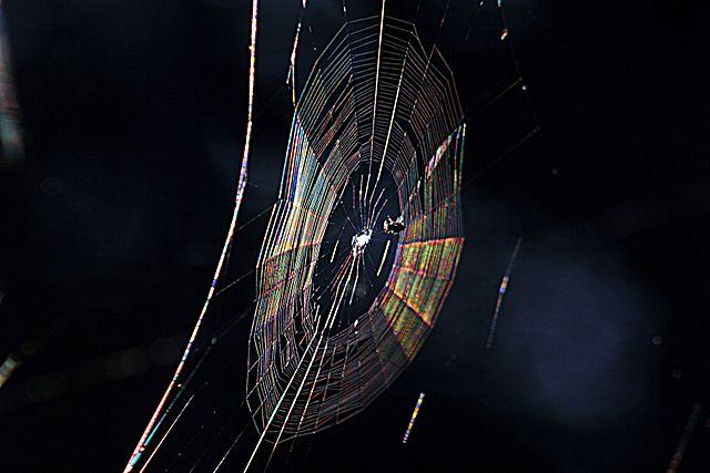 عنکبوت هم می تواند رنگین کمان بسازد!!! (طیف نمایی و بررسی پراش از توری پراش)
